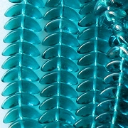 10mm Dark Aqua 'Angel Wing' Beads [50]